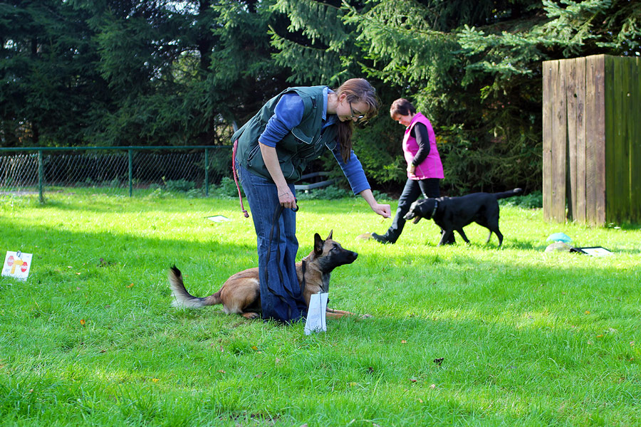 IMG_1427_Rally_Obedience